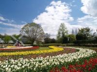 (フラワーセンター)「春のうきうきフェア」はじまります!
